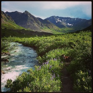Hiking in Hatcher's Pass with my dog, Porkchop