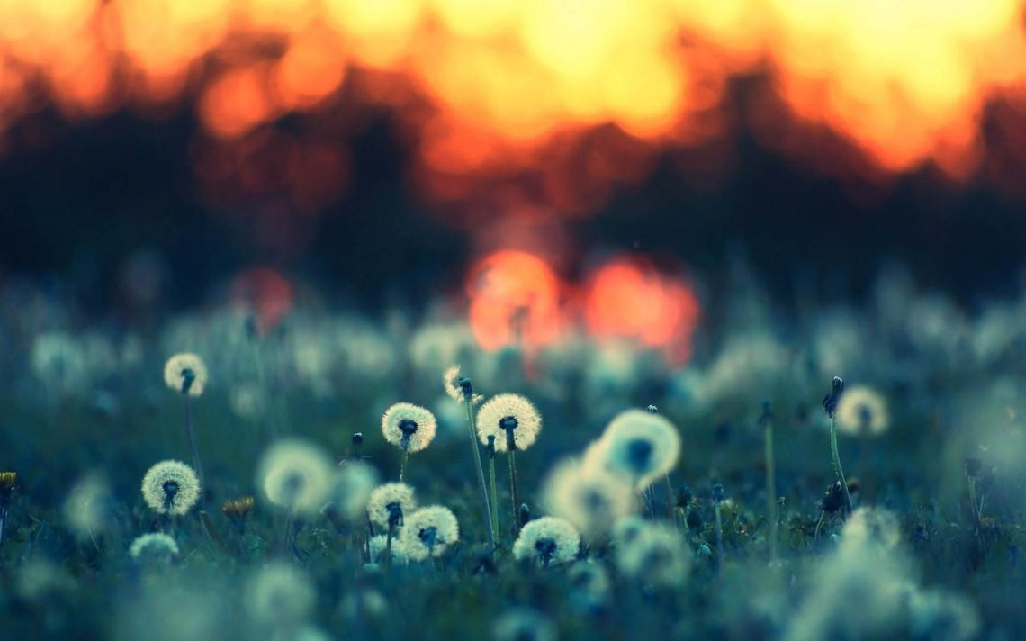 dandelions_field_light_89958_3840x2400